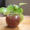 ミニ観葉植物|部屋がちょっと可愛くなるおすすめミニ観葉植物8選