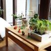 観葉植物に虫がついてしまったら迅速に取るべき5つの行動